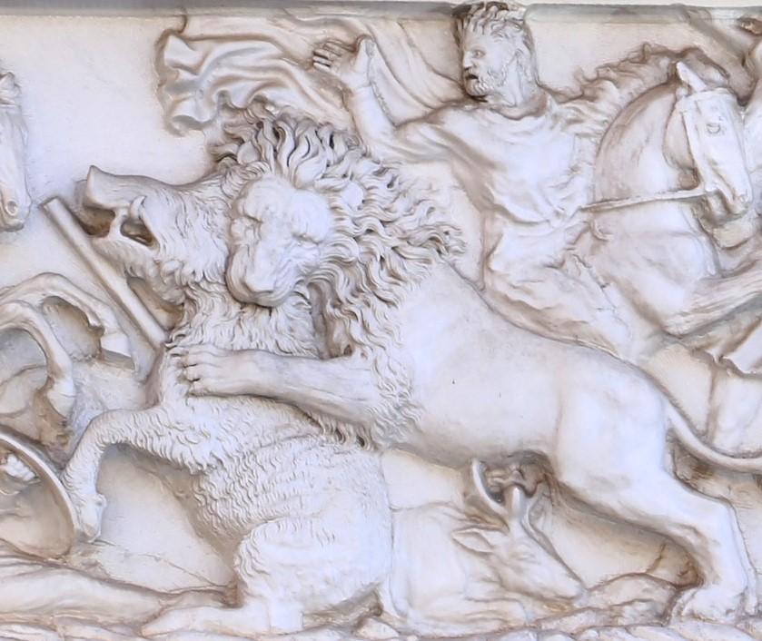 leone e cinghiala bianca